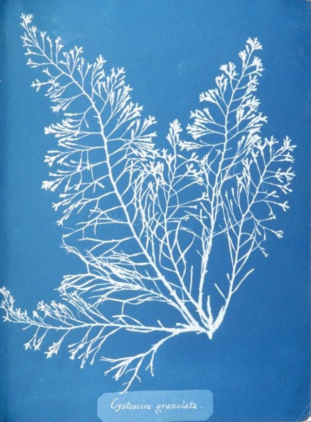 algaebook_cyanotype_wood_photographic_process_london_flower_school_floristry_courses04