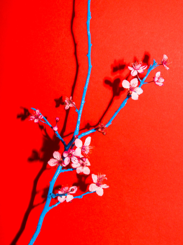 spring_cherry_blossom_flower_arrangement_04