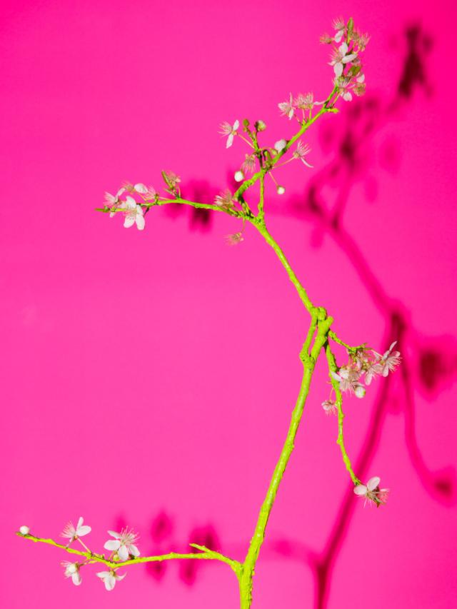 spring_cherry_blossom_flower_arrangement_03