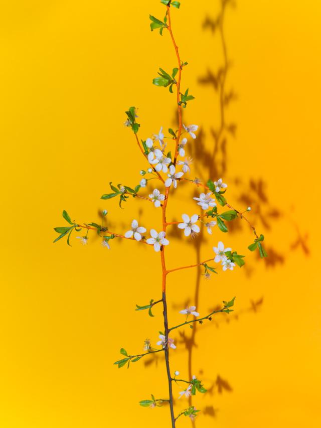 spring_cherry_blossom_flower_arrangement