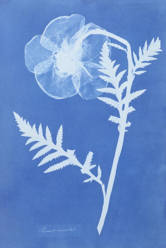 cyanotype_wood_photographic_process_london_flower_school_floristry_courses02